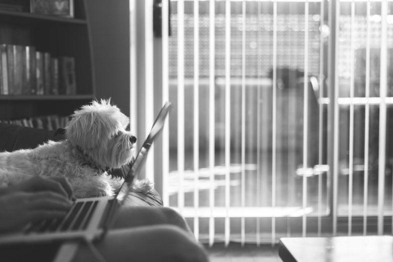 Głaskanie w pracy. Wpływ zwierząt na produktywność pracowników